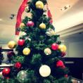 クリスマスツリー登場☆